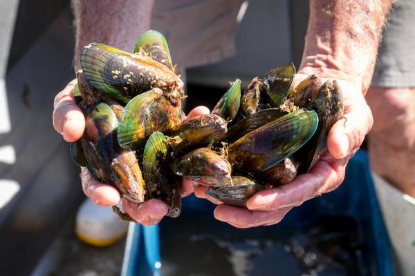 hopewell-mussel-farm