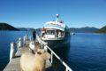 pelorus-mail-boat